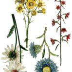 Wild Flower Botanicals Decor Transfer™