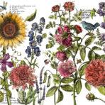 Botanist's Journal Decor Transfer™™