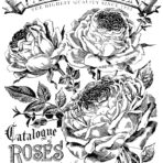 Catalogue of Roses  Paintable™ Decor Transfer™
