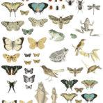 Entomology Etcetera Decor Transfer™