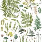 Fronds Botanical Decor Transfer™